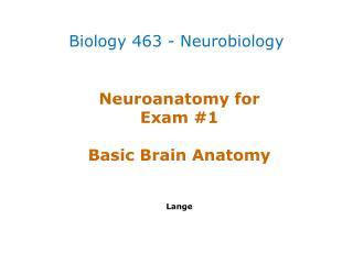 Neuroanatomy  for  Exam #1 Basic Brain Anatomy Lange