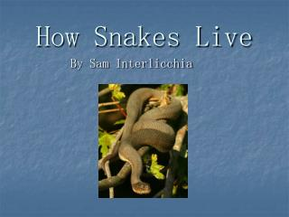 How Snakes Live