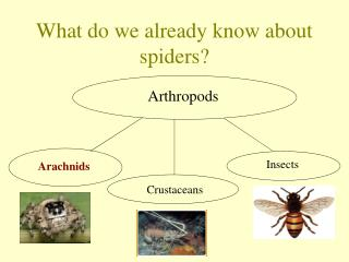 What do we already know about spiders?