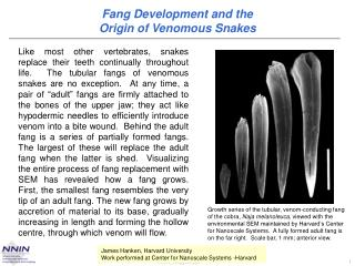 Fang Development and the  Origin of Venomous Snakes