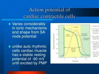 Action potential of  cardiac contractile cells