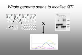 Whole genome scans to localise QTL