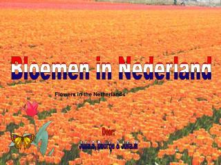 Bloemen in Nederland