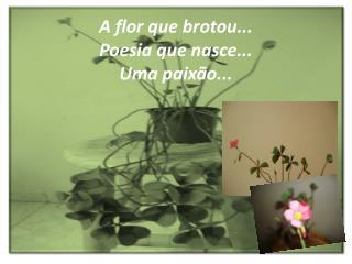 A flor que brotou... Poesia que nasce... Uma paixão...