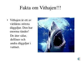 Fakta om Vithajen!!!
