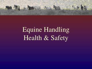Equine Handling  Health & Safety