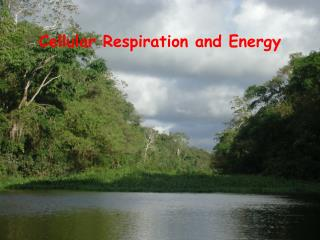Cellular Respiration and Energy