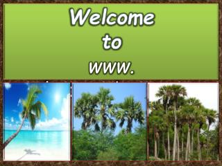 Best Varieties of Sabal Palm Trees