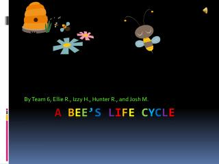 A Bee s Life Cycle