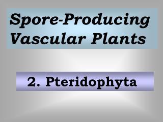 2. Pteridophyta
