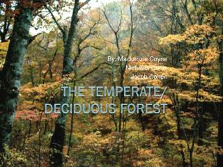 The Temperate/ Deciduous Forest