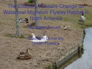 The Effects of Climate Change on Waterfowl Migration Flyway Habitat in North America