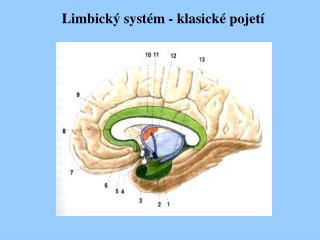 Limbický systém - klasické pojetí