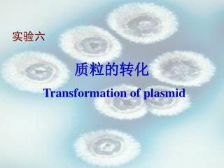 质粒的转化 Transformation of plasmid