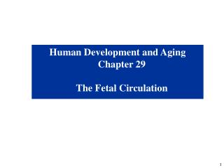 Human Development and Aging Chapter 29 The Fetal Circulation