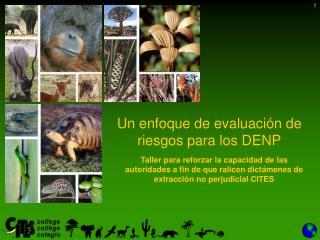 Un  enfoque  de  evaluación  de  riesgos para  los DENP