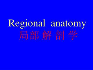 Regional  anatomy 局部 解 剖 学