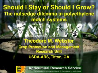 Should I Stay or Should I Grow?  The nutsedge dilemma in polyethylene mulch systems