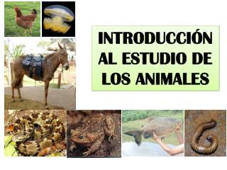 Introducción al estudio de los Animales