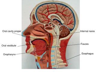 PPT - Frontal Sinus Surgery PowerPoint Presentation - ID ...