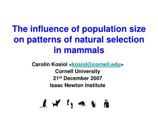 The influence of population size on patterns of natural selection in mammals