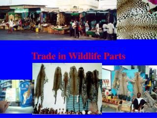 Trade in Wildlife Parts