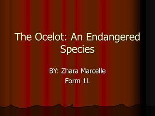 The Ocelot: An Endangered Species