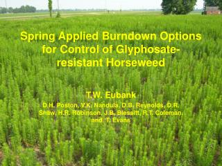Spring Applied Burndown Options for Control of Glyphosate-resistant Horseweed