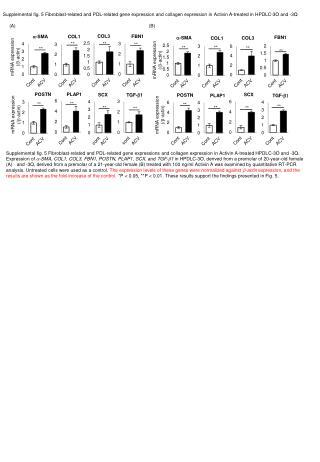 mRNA expression (/ b -actin )