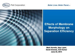 Effects of Membrane Morphology on Separation Efficiency