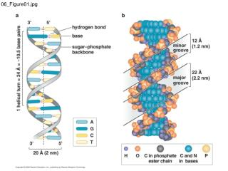 06_Figure01.jpg