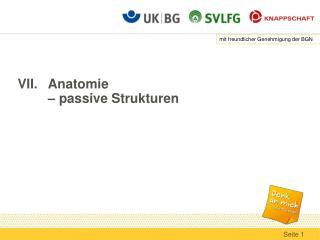 VII.Anatomie  � passive Strukturen