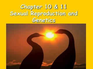 Chapter 10 & 11 Sexual Reproduction and Genetics