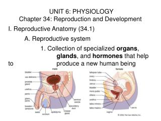 UNIT 6: PHYSIOLOGY Chapter 34: Reproduction and Development I. Reproductive Anatomy (34.1)