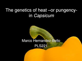 The genetics of heat  or pungency- in Capsicum