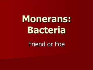 Monerans : Bacteria