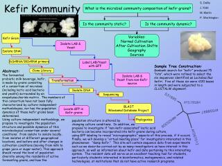Kefir Kommunity