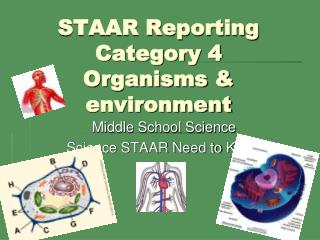 STAAR Reporting Category 4 Organisms & environment