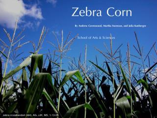 Zebra Corn