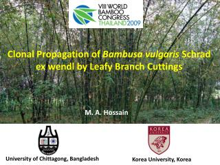 Clonal  Propagation of  Bambusa vulgaris Schrad  ex  wendl  by Leafy Branch Cuttings