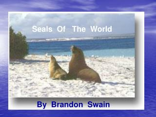 Seals  Of   The  World