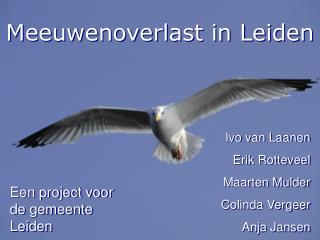 Meeuwenoverlast in Leiden