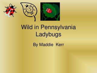 Wild in Pennsylvania Ladybugs