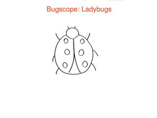 Bugscope: Ladybugs