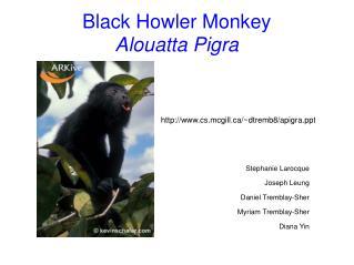 Black Howler Monkey Alouatta Pigra