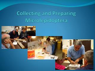 Collecting and Preparing  Microlepidoptera