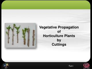 Vegetative Propagation  of  Horticulture Plants by Cuttings