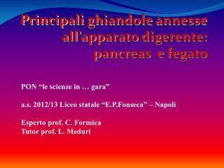 Principali ghiandole annesse all'apparato digerente: pancreas  e fegato