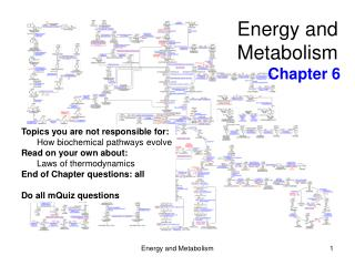 Energy and  Metabolism Chapter 6
