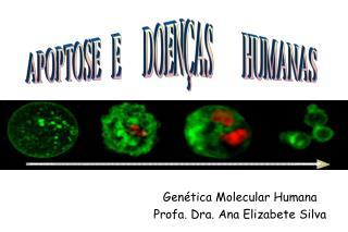 Genética Molecular Humana Profa. Dra. Ana Elizabete Silva